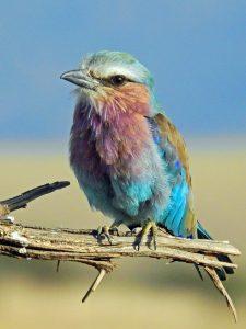 oiseau-couleurs